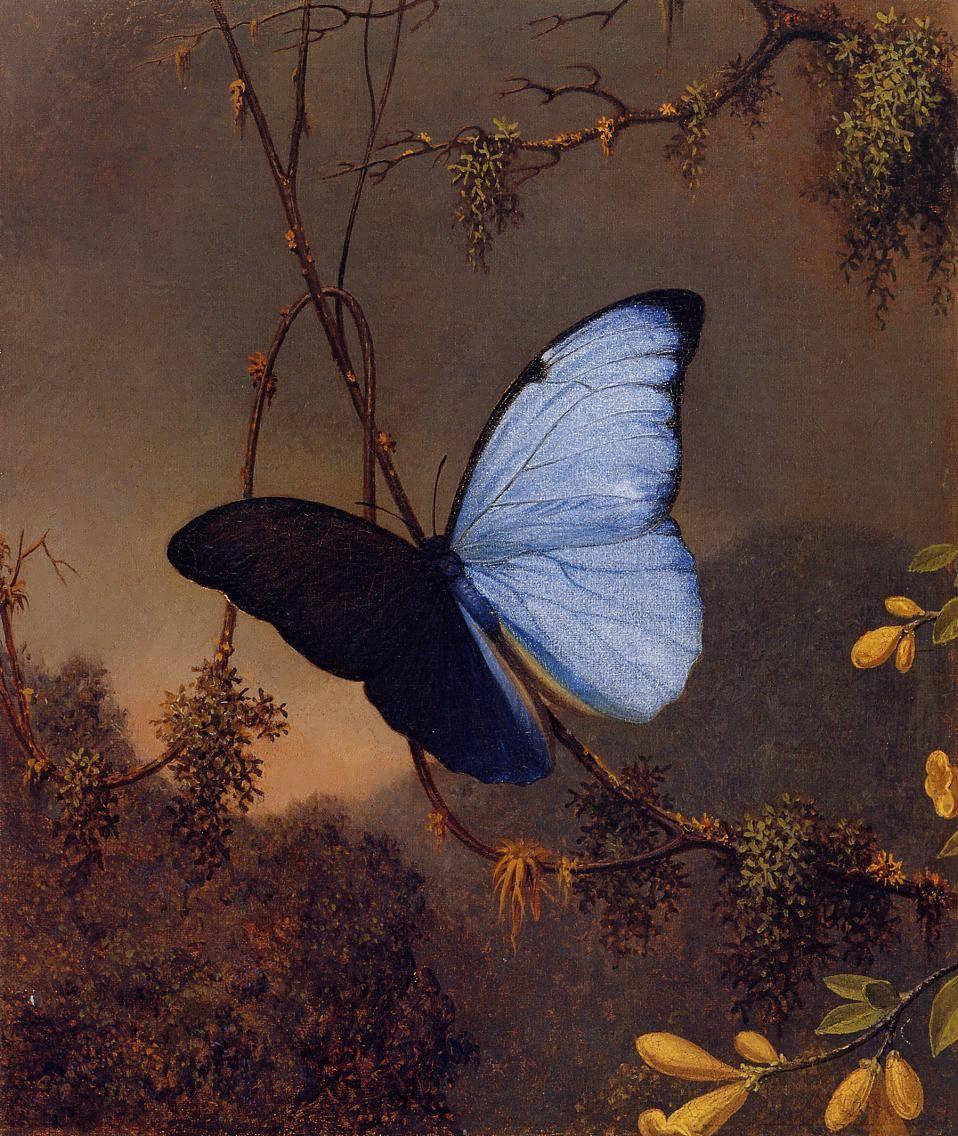 MartinJohnsonHeade-BlueMorphoButterfly1