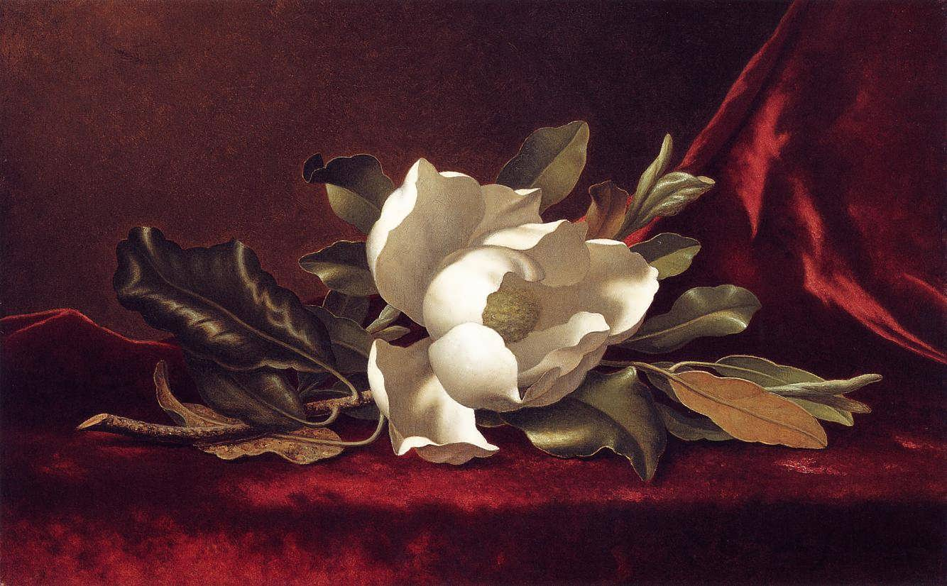 Rosa - goblen galerie - Pagina 4 MartinJohnsonHeade-TheMagnoliaBlossom1