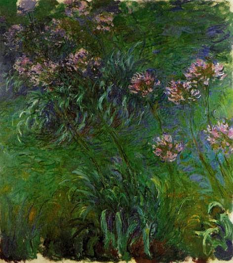 Monet-Agapanathus