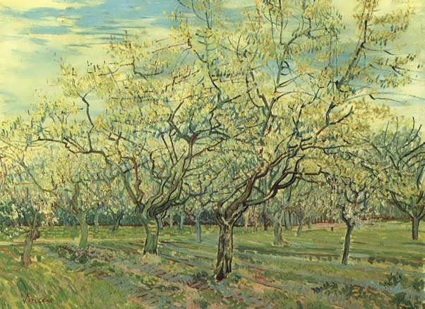 OrchardwithBlossomingPlumTrees