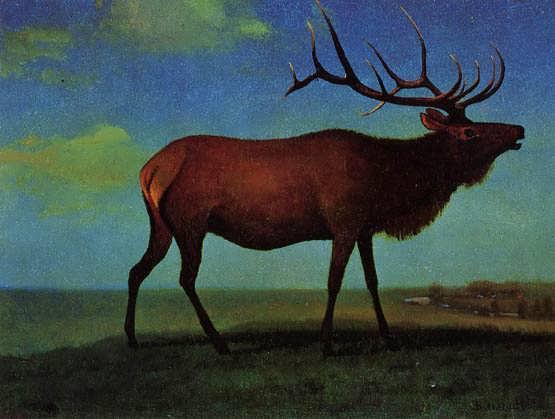 bier-Elk